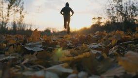 Desportista irreconhec?vel que movimenta-se no parque do outono que pisa nas folhas de bordo secas Treinamento masculino do atlet vídeos de arquivo