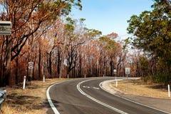 Después de árboles del bushfire y friegue quemado Imagen de archivo