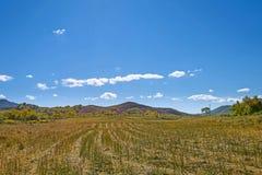 Después de cosechar la paja del trigo Imagenes de archivo