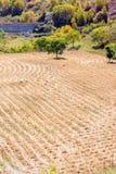 Después de cosechar la paja del trigo Foto de archivo