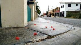 Después de la lluvia Foto de archivo libre de regalías