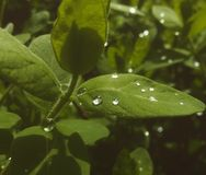 Después de la lluvia Fotos de archivo libres de regalías