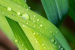 Después de la lluvia Imagen de archivo