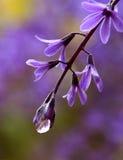 Después de la lluvia, púrpura Imágenes de archivo libres de regalías