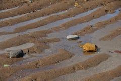 Después de la marea Foto de archivo libre de regalías