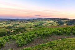 Después de la puesta del sol, viñedos del Beaujolais, Francia Fotografía de archivo