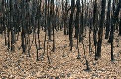 Después de la quemadura 2 Fotos de archivo
