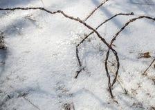 Después de la tormenta de hielo Imágenes de archivo libres de regalías