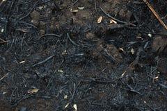 Después de las cenizas quemadas de cañas Foto de archivo