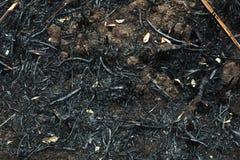 Después de las cenizas quemadas de cañas Fotografía de archivo