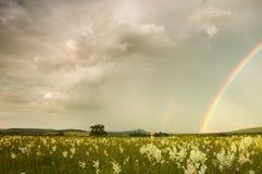 Después de lluvia Imagenes de archivo