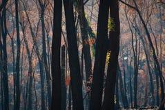Después de los fuegos Foto de archivo libre de regalías