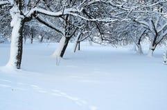 Después de tormenta de la nieve Foto de archivo libre de regalías