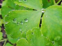 Después de una lluvia del verano la foto macra del agua cae el rocío en los troncos y las hojas de plantas verdes imagenes de archivo