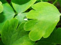Después de una lluvia del verano la foto macra del agua cae el rocío en los troncos y las hojas de plantas verdes fotos de archivo