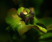 Después de una lluvia del verano la foto macra del agua cae (rocío) en los troncos y las hojas de plantas verdes fotografía de archivo libre de regalías