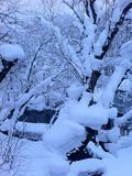 Después de ventisca pesada, de una nieve por todo una cubierta del parque un árbol y del río en día bajo cero Imagen de archivo libre de regalías
