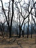 Después del bushfire Foto de archivo libre de regalías
