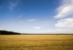 Después del campo de la cosecha del trigo Foto de archivo
