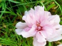 Después del flor Imagen de archivo