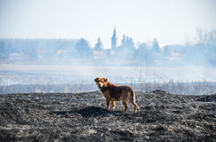 Después del fuego Imagen de archivo