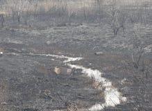 Después del fuego el banco de la corriente cubierta con la ceniza Foto de archivo libre de regalías