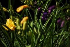 Después del jardín de la lluvia Imagen de archivo libre de regalías