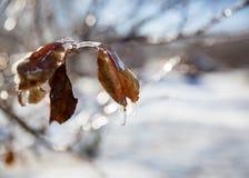 Después del strorm del hielo Fotografía de archivo libre de regalías
