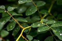 Despu?s de la lluvia fotografía de archivo libre de regalías