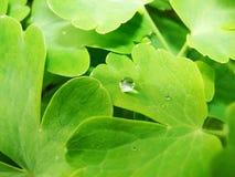 Después de una lluvia del verano la foto macra del agua cae el rocío en los troncos y las hojas de plantas verdes Foto de archivo