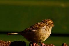 Dess från fågels en sikt för öga fotografering för bildbyråer