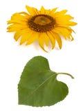 dess leafsolros Arkivbilder