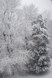 dess snowing Arkivbild