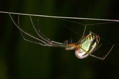 dess spindelrengöringsduk Fotografering för Bildbyråer