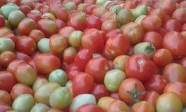 Dess tomatfestival Fotografering för Bildbyråer