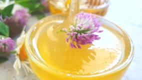 Dessert frais d'été de mouvement lent d'arome de trèfle de fleur de miel banque de vidéos