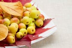 Dessert a partire dall'autunno Fotografia Stock