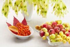 Dessert a partire dall'autunno Immagini Stock