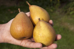 Dessert Pears Royalty Free Stock Images
