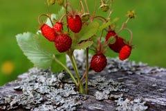 Dessert strawberries Royalty Free Stock Photography