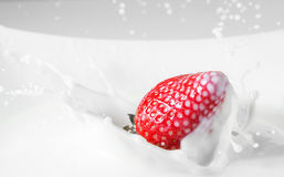 Dessert: strawberry falling in milk with splashes. Red and white Royalty Free Stock Photo