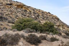 Mediterranean Mountain Cactus Dry. Dessert Surface Backdrop Background Detail Brown Mediterranean Mountain Cactus Dry stock images