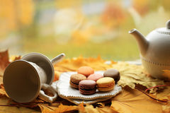 Dessert. Tea with colored macaroons amid the autumn forest stock image