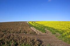 Dessicated potato crop Stock Photos