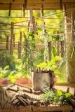 Dessiccateur de fines herbes aromatique avec des herbes sèches sur des lignes de blanchisserie image stock