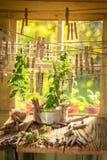 Dessiccateur de fines herbes avec les feuilles en bon état accrochant sur des lignes avec des applaudissements images libres de droits
