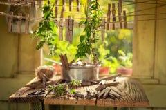 Dessiccateur de fines herbes fait maison avec l'origan dans un jardin d'été photo stock
