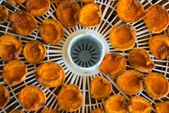 Dessiccateur de nourriture avec les abricots secs sur une table image stock