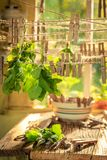 Dessiccateur fait maison avec les feuilles en bon état accrochant sur des lignes photos stock