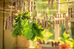 Dessiccateur rustique avec les feuilles en bon état accrochant sur des lignes avec des applaudissements photo stock